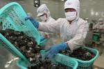 Không sử dụng kháng sinh trong thức ăn thủy sản