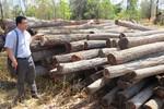 Điều tra, xử lý nghiêm các đối tượng phá rừng