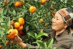 Biểu dương nông dân sản xuất, kinh doanh giỏi toàn quốc