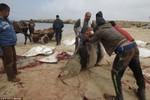 Dân Palestine xẻ thịt cá đuối chết dạt trên bãi biển đem bán