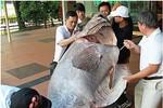 Bắt được cá mú nặng 270 kg, dài 2 mét tại Singapore