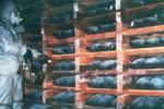 Phiến quân Syria: Assad đã chuyển 2 lô vũ khí hóa học cho Hezbollah