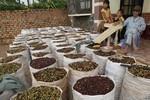 Giá cà phê Robusta trên thế giới tăng do Việt Nam chậm thu hoạch
