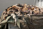 Video: Công nghệ giết chó lột da làm găng tay, quần áo... ở Trung Quốc