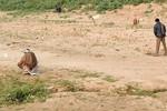 Ấn Độ: Nữ sinh 17 tuổi tự tử vì cha mẹ không chịu xây nhà vệ sinh