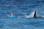 Video: Cá mập tấn công nhà vô địch lướt sóng người Úc