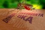 Việt Nam từng chủ động nuôi chủng muỗi Aedes, trung gian truyền virus Zika