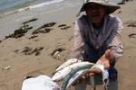 Cá chết ở đâu đó dạt vào bờ, chắc gì đã phải do xả thải?
