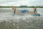 Yêu cầu khởi tố vụ giả giấy tờ kiểm định sản phẩm thức ăn thủy sản