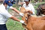 Hỗ trợ vắc xin cho các huyện nghèo