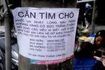 Nhà giàu Hà Nội chi 50 triệu tìm... chó lạc