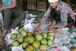 """Xoài, măng cụt Trung Quốc được gắn mác """"made in Việt Nam"""""""