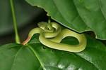 Ngủ trong màn, bé gái 3 tháng tuổi bị rắn lục cắn nguy kịch