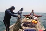 Khảo sát tìm nguyên nhân cá chết xếp lớp dưới đáy biển