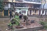 """Đêm mưa, """"sưa tặc"""" trộm cây giữa sân nhà trên phố Giảng Võ"""