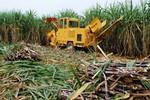 Bầu Đức giải bài toán trì trệ của ngành mía đường