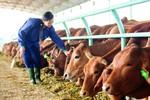 Lập Tổng công ty, Bầu Đức cam kết phát triển nông nghiệp bền vững