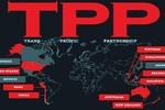 Tham gia TTP, ngành sữa và bò thịt hưởng lợi