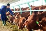 6 tháng bán bò, bầu Đức lãi 766 tỷ đồng