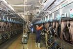 Gia nhập TPP, thách thức cho ngành sữa Việt Nam