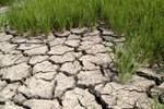 BIDV hỗ trợ 23 tỷ đồng khắc phục hạn hán ngập mặn