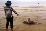 Đề nghị khẩn trương thu gom tiêu hủy cá chết tránh bùng phát bệnh dịch