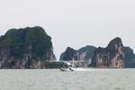 Hãng hàng không Hải Âu thua lỗ nặng, rủi ro được báo trước