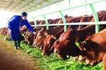 Bầu Đức bán bò, thu về hơn 2,5 nghìn tỷ đồng