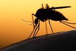 TP.HCM phát hiện thêm 6 trường hợp nhiễm Zika