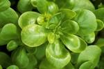 10 loại thực phẩm siêu có lợi cho sức khỏe