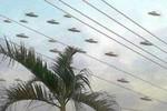 """Sau vụ """"đĩa bay Thanh Hóa"""", UFO lại """"lũ lượt"""" trên bầu trời Việt Nam"""