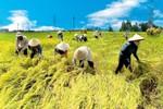 Người Việt hiếu học, cần cù, sáng tạo… sao vẫn nghèo?