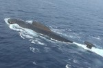 Số lượng tàu ngầm Trung Quốc gấp 4 lần Ấn Độ