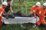 Bị sét đánh chết trong khi lùa bò vào chuồng