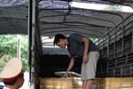 Bắt giữ xe chứa 13 thùng đựng thịt heo sữa nghi có dịch bệnh