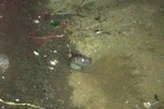Chuột gieo rắc những mầm bệnh nguy hiểm nào?