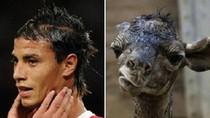 Khi sao bóng đá giống... hươu, cừu, báo đến bất ngờ