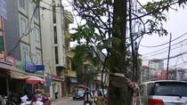 """Góc ảnh độc giả: Cây xanh, cột điện mọc """"vô duyên"""" trên nhiều phố HN"""