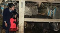 Hoa hậu VN và người đẹp biển đi từ thiện ở miền Trung