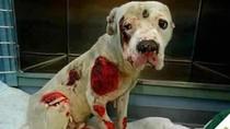 Chú chó 'vô danh' bị hành hạ gây xúc động trên facebook