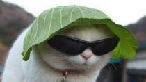 Siêu hài: Những chú mèo nhí nhố