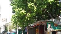 Thành phố Hà Nội cần xử lý nghiêm vụ đất công bị xẻ thịt ở phường Mỹ Đình 1