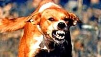 Bài thuốc cứu hàng ngàn người bị chó dại cắn sùi bọt mép