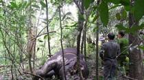 Xót xa trước những hình ảnh tàn sát voi rừng và voi Bản Đôn