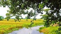Góc ảnh: Vẻ đẹp mê hồn của những cánh đồng lúa Thừa Thiên Huế