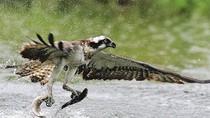 10 pha hành động ngoạn mục của chim