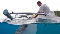 Hình ảnh ngư dân Philippines dùng tay cho cá mập voi ăn