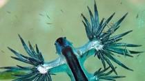 Những loài cá kì quái dưới đáy đại dương
