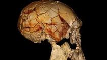 Phát hiện chủng người mới tại châu Phi