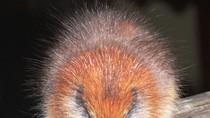 Top 10 loài động vật có nguy cơ tuyệt chủng trên toàn cầu